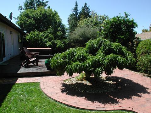 706 GRAYMONT CIR, CONCORD, CA 94518  Photo 10